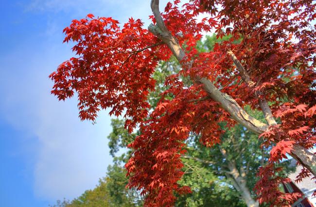 秋风静美 吟唱九月的八度